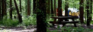 Campsite with Tent and Picnic Table in Geauga Park District