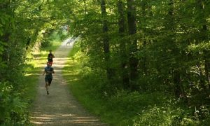 Runners on Path in Geauga County Park