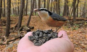 Hand Holding Bird Seed and Bird