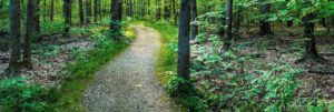 Beartown Lake Gravel Trail