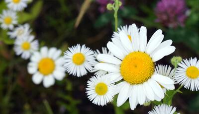 Flowers in Frohring Meadows Habitat