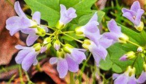 Flowers in Woodin Road Park Habitat