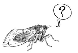 Cicada question